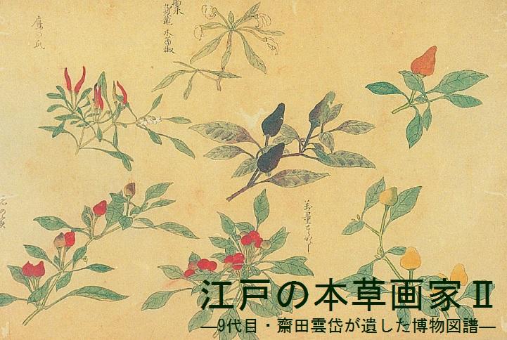 江戸の本草画家Ⅱ